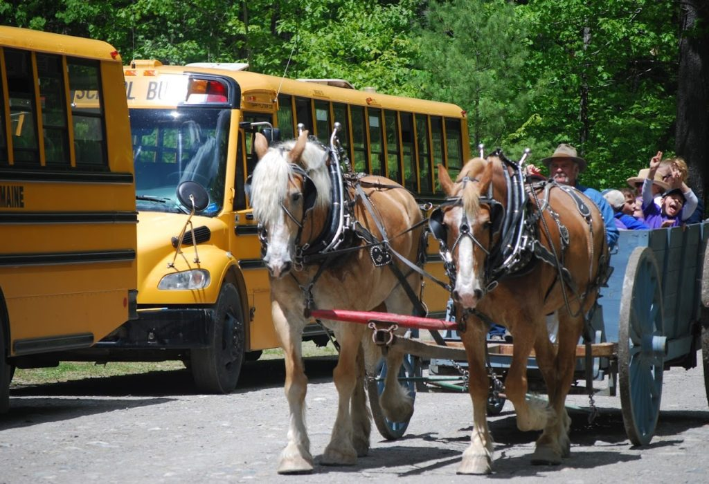 Horse-drawn wagon goes by busses.