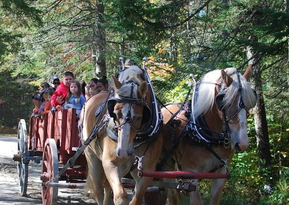 2018 Living History Horses and Wagon