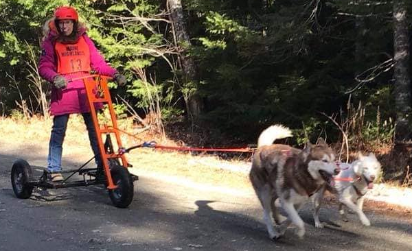 Dogs pulling cart.
