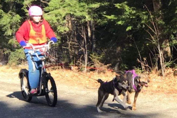 Dogs pulling bike.